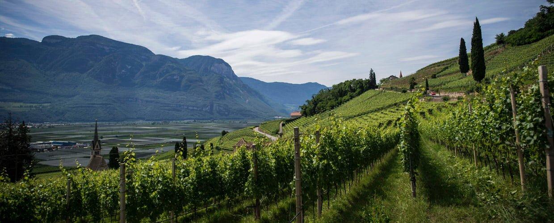 Bodega Châpeau Wines